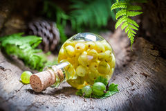 Homemade liqueur made of alcohol and gooseberries Royalty Free Stock Image