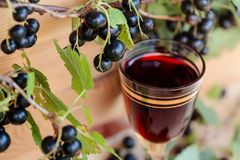Homemade liqueur made from black currants and fresh berries. stock photography