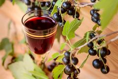 Homemade liqueur made from black currants and fresh berries royalty free stock photo