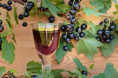 Homemade liqueur made from black currants and fresh berries. Stock Images