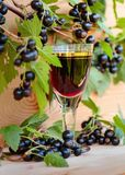 Homemade liqueur made from black currants and fresh berries. stock image