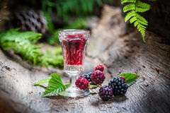 Homemade liqueur made of blackberries and alcohol Stock Photography