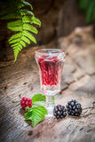 Homemade liqueur made of blackberries and alcohol in forest Royalty Free Stock Photography
