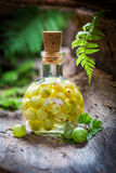 Homemade liqueur made of gooseberries and alcohol Stock Image