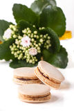 Homemade macaroons with flowers Royalty Free Stock Photography