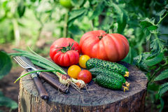 Homemade mix vegetables from greenhouse Royalty Free Stock Image