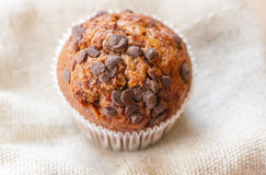 Homemade muffin with chocolate chips Stock Photography