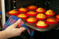 Homemade muffins. Woman hand taking out some fresh baked homemade muffins from the oven Stock Photos