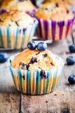 Homemade muffins with blueberries closeup Royalty Free Stock Photos