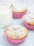 Homemade muffins with choco chips Stock Image