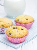 Homemade muffins with choco chips Stock Photography