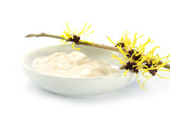 Homemade ointment in a white bowl and witch hazel flowers (Hamam Royalty Free Stock Photography