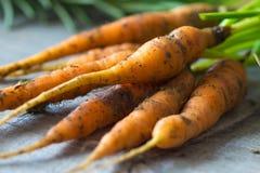 Homemade organic carrots Stock Photography