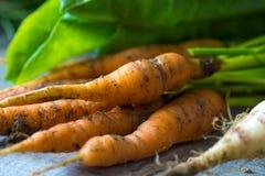Homemade organic carrots Royalty Free Stock Photography