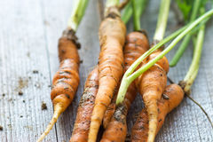 Homemade organic carrots Stock Images