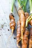 Homemade organic carrots Stock Photo