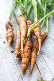 Homemade organic carrots Stock Image