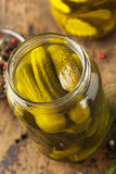 Homemade Organic Crunch Green Pickles Stock Image