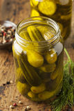 Homemade Organic Crunch Green Pickles Stock Photography