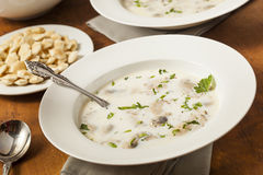 Homemade Organic Oyster Stew Appetizer Stock Photography