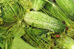 Homemade pickles in brine Stock Photo