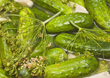 Homemade Pickles In Brine Royalty Free Stock Photo