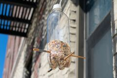 Free Homemade Plastic Bottle Bird Feeder Hanging Outside An Urban Apartment Building In New York City Royalty Free Stock Photography - 184138057