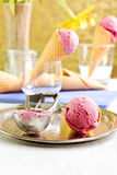 Homemade plum ice cream Royalty Free Stock Image