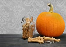 Homemade pumpkin dog cookie bones in a canning jar next to a pum Stock Photo