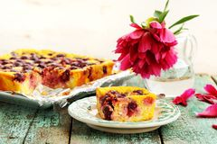 Homemade quark pie with cherries and red peony falling petals on Stock Image