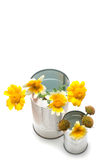 Homemade recycle cans bucket with wildflowers. On white background stock image