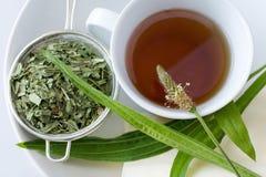 Homemade remedy - herbal plantain tea plantago lanceolata - he. Homemade remedy - herbal plantain tea plantago lanceolata on the white background - health care stock photo