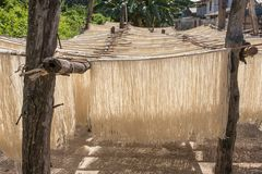 Homemade rice pasta drying on sun Royalty Free Stock Photography
