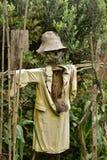 Homemade scarecrow. A home-made scarecrow standing in his dense garden Stock Photos