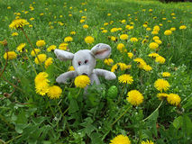 Homemade soft toy on the lawn. In the middle between yellow flowers. Photo made on a sunny spring day royalty free stock image
