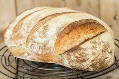 Homemade sourdough bread. Freshly baked until crispy. Stock Photos
