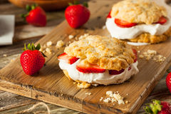 Homemade Strawberry Shortcake with Whipped Cream Stock Photography