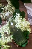 Homemade syrup of elderberry flowers in a glass jar and elder branches on a wooden table Rustic style stock photos