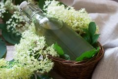 Homemade syrup of elderberry flowers in a glass jar and elder branches on a wooden table Rustic style. stock image