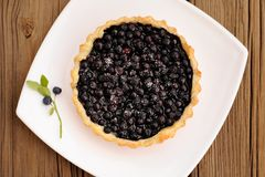Homemade tart with whole wild blueberries in square white plate Stock Image
