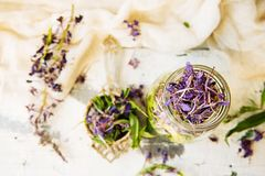 Ivan Tea Royalty Free Stock Photo