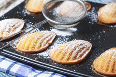 Homemade Traditional french madeleines cookies in a special made Royalty Free Stock Image