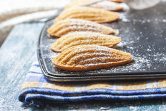 Homemade Traditional french madeleines cookies in a special made Royalty Free Stock Images