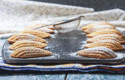 Homemade Traditional french madeleines cookies in a special made Stock Image