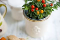 Homemade Tree in a pot with red berries and green leaves. White background. Free space for text or a postcard stock photo