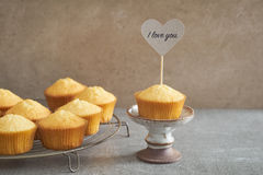 Homemade vanilla cupcake Stock Photography