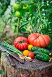 Homemade vegetables in sunny garden Royalty Free Stock Images