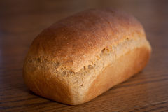Homemade whole wheat bread. Wholesome loaf of homemade whole wheat bread fresh out of the oven Stock Images