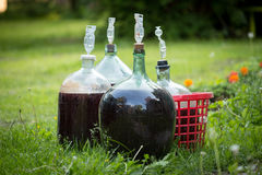 Homemade wine. Big bottles of homemade wine on grass Royalty Free Stock Images