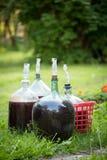 Homemade wine. Big bottles of homemade wine on grass Stock Photography